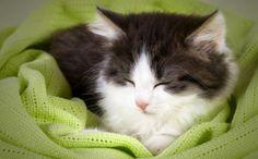 Daily Cute: Sleepy Kitten Wants to Stay Up