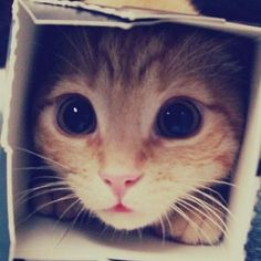 I jut love cats