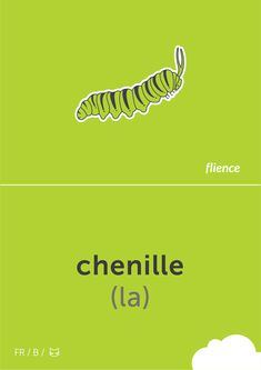 Chenille #flience #animal #insects #english #education #flashcard #language