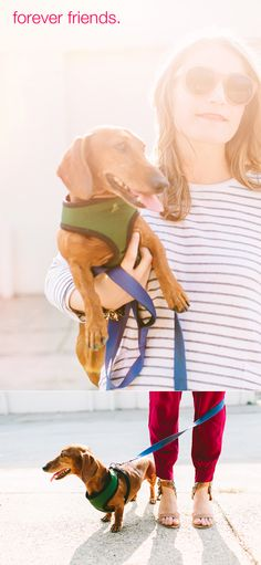 enter to win a $300 gift card from @Bridget Wilson #giveaway #splendid #dachshund