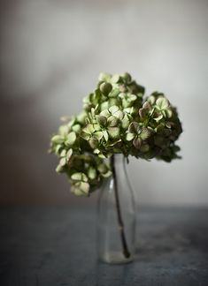 Green  #flower #jar #green