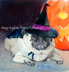 """Pugwitch"" 8x10"" colored pencil  by Margi Hopkins of Pepper portraits LLC www.pepperportraits.com"