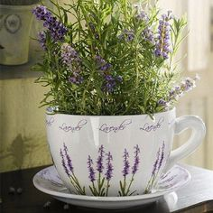 Love The Large Coffee Cup Planter......