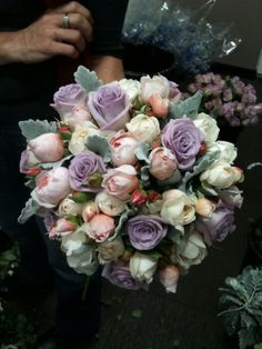 David Austin Roses, First Flush Mauve Roses and delightful hybrid Delphinium with Dusty Miller foliage