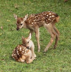 Nature Animals, Animals And Pets, Beautiful Creatures, Animals Beautiful, Majestic Animals, Deer Photos, Deer Pictures, Tier Fotos, Mundo Animal