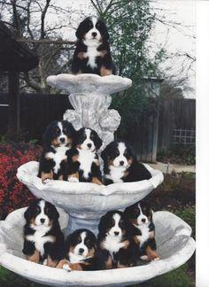 子犬が湧き出る噴水 (via The fountain of youth.) | Namidame links