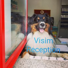 Reception, Dogs, Animals, Party, Animales, Animaux, Pet Dogs, Doggies, Animal
