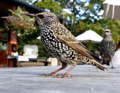 BIRD Best Commercials, Pictures Online, Cool Pictures, Art Gallery, Bird, Image, Birds, Fotografia, Art Museum