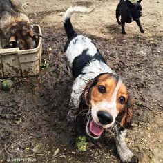 From @truman_the_bagel: rain dropdrop top  playin in the mud even when mom tells me to stop stop #cutepetclub [source: http://ift.tt/2pjddse ]
