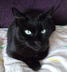 CELIA est une chatte très gentille qui à son arrivée chez moi a materné 4 chatons de 5 semaines que je venais juste d'accueillir, et qui malheureusement se sont trouvés privés de leur maman. Elle les toilettait et continuait leur éducation, se montrant une maman chatte de substitution tout à fait admirable ! Refuge : ASSISTANCE AUX FELINS DIEPPOIS (Seine-Maritime) Tél : 06 62 35 26 29