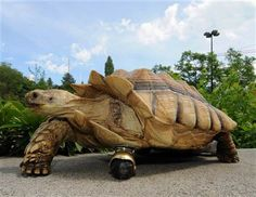 amazingly innovative inspiration <3        A 12-year-old African tortoise who recently had his front left leg amputated due to injury is now moving just fine, thanks to a swiveling wheel attached to his shell by doctors at Washington State University's veterinary hospital.