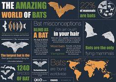 The amazing world of bats - Megabats (Flying-Fox, Fruit bat) and Microbats