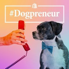 It's #Dogpreneur Week here at Shopify and the canines have taken over our Instagram!  These pooches fill important roles like Chief Happiness Officer and SVP of Snuggles. Fluffy as their titles may be they are integral to many businesses sometimes as the inspiration for the brand or as moral support for their entrepreneurial humanfolk. These are their stories in their own words. by shopify