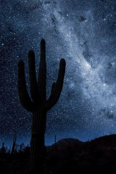 Night Sky Saguaro. Tucson ❤. Wildcat for Life!