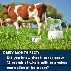 A quick dairy fact in honor of dairy month!