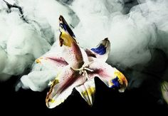 Henry Hargreaves's Smoke and Lily Flower Photography | Trendland: Fashion Blog & Trend Magazine