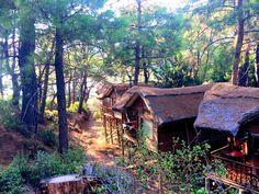 Las pintorescas casitas en el árbol de los albergues de Kabak.