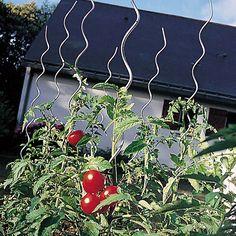 Resultado de imagen de cómo sujetar plantas de tomates en jardineras Fruit, Vegetables, Centre, Tomato Plants, Window Boxes, Fit, The Fruit, Veggies, Vegetable Recipes