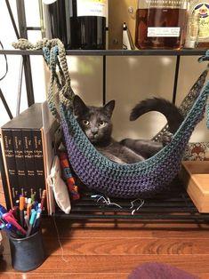 Free Crochet Toy Hammock Pattern I Crocheted A Cat Hammock Crochet - Cat in the box ❤️ - Katzen :) Gato Crochet, Free Crochet, Crochet Cat Toys, Crochet Cat Pattern, Crochet Hammock, Toy Hammock, Diy Cat Hammock, Hammock Ideas, Cat Room