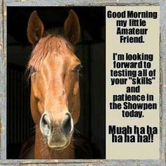 Sometimes I think my horse plans this out before a show...