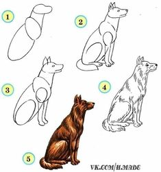 Learn to draw animals. Discussion on LiveInternet - Russian Service Online Diaries