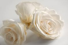 lovely white roses. all  color roses are beautiful to me.