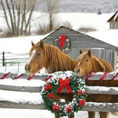 Winter horses waiting for treats!