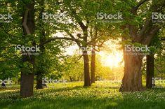 Muurstickers Bossen Sunlight in the green forest springtime Spring Forest, Spring Time, Sunlight, Royalty Free Stock Photos, Wallpaper, Garden, Image, Drawing Practice, Tapestry