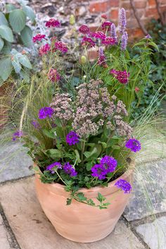 Pot for June: Plant yourself a mini cottage garden with Verbena 'Homestead purple,' Scabiosa 'Cherry pie,' Sedum 'Mr Goodbud,' Agastache rugosa and Stipa tenuissima grass. These plants have a long flowering season and attract butterflies. For more verbena planting ideas visit our website http://www.gardenersworld.com/plants/pots-containers/hanging-baskets/geranium-and-verbena-pot-display/1163.html Photo by Jason Ingram