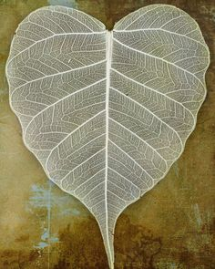 lace leaf heart
