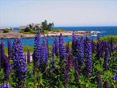 Kennebunkport, Maine ((anywhere on the Maine coast is really my happy vacation place!))