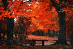 Bench under the red by Tiger Seo #xemtvhay