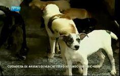 """""""O GRITO DO BICHO"""": 66 gatos já forma envenenados com chumbinho - BA"""