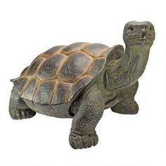 ©The Cagey Tortoise Statue: Large
