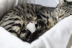 Your pregnant cat may be able to give birth with no problems. However, if trouble arises, knowing in advance what to look for will help the process.