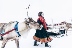 Ounaskievari Reindeer Farm in Finland Travel Around The World, Around The Worlds, Husky, Safari, Snow Queen, Finland, Reindeer, Places Ive Been, Dame