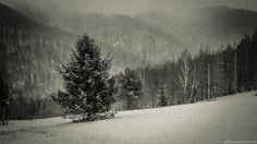 Lonely Tree by Renderator.deviantart.com
