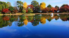 京都 大覚寺 大沢池 紅葉 銀杏 水鏡 Japan,Kyoto,Daikaku-ji,Osawaike,autumn leaves,colored leaves