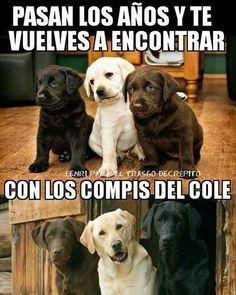 Imagenes de Humor #m