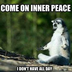 15 Funny Fitness Memes: Weight loss routines or any fitness regime can get boring, but don't give up yet. Get motivated and laugh yourself to the gym with these insanely funny memes. Funny Animal Pictures, Funny Animals, Cute Animals, Hilarious Pictures, Funny Photos, Jokes Photos, Funny Owls, Funny Cute, The Funny