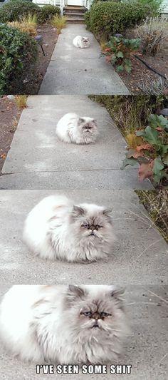 Saw this old fart walking to work this morning - Imgur