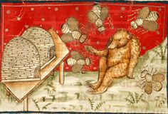 Bears and honey. An image from  medieval manuscript. (c)The British Library Board