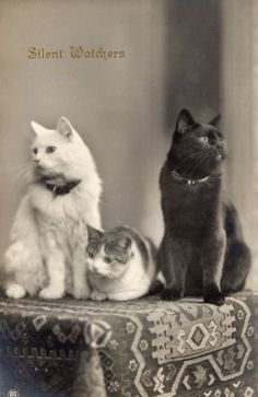 Lovely Vintage Postcard of Three Cats Cats Outside, Cat Towers, Three Cats, Kinds Of Cats, Photo Chat, Owning A Cat, Curious Cat, Old Cats, Cat Photography