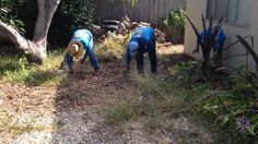 Residential Garden Maintenance Services Agency in Santa Barbara -sbevol. Fall Clean Up, Garden Weeds, Garden Maintenance, Weed Control, Pebble Beach, Lawn Care, Santa Barbara, Landscape, World