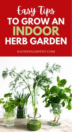 This guide has everything in it! You'll learn to successfully grow herbs indoors all year long! #herbgarden #growingherbs #dayswellspent #mastergardener