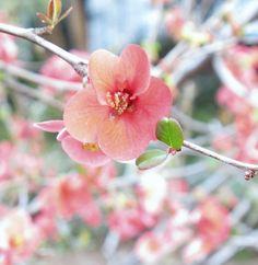 in bloom..