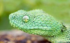 硬い鱗のグリーンのヘビをアップで撮影した綺麗な写真壁紙画像
