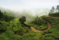 Munnar- For a deep bond amidst hill stations. Plan your next vacation at https://tigsee.com