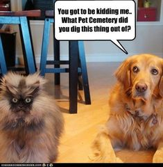 Forget the dumb speech bubble. Just stare at that cat...