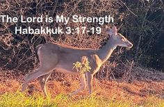 God Morning from Trinity, TX Today is Thursday 10-7-2021 Day 280 in the 2021 Journey Make It A Great Day, Everyday! The Lord God is our strength. Today's Scriptures: Habakkuk 3:17-19 (NKJV) Though the fig tree may not blossom, Nor fruit be on the vines;Though the labor of the olive may fail, And the fields yield no food;Though the flock may be cut off from the fold, And there be no herd in the stalls— Yet I will rejoice in the Lord, I will joy in the God of my salvation... Psalm 118, Psalms, Scripture For Today, Lord Is My Strength, Jan 1, Fig Tree, Scriptures, Fields, Thursday